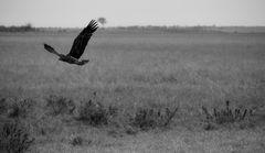 Adler II, Kenia