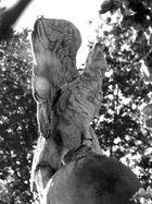 Adler in freier Wildbahn