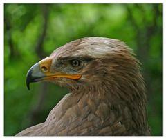 Adler oder so