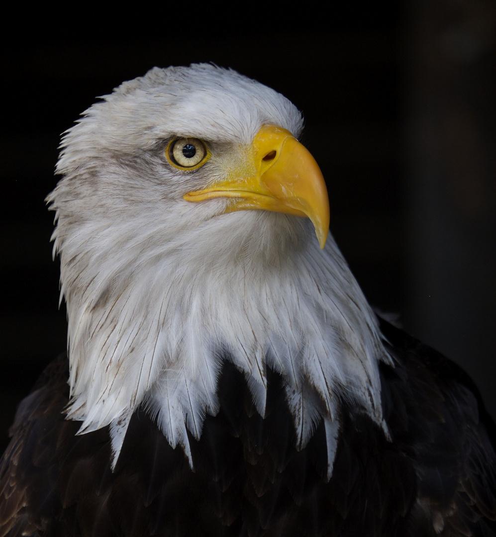 Adler, sei wachsam ...