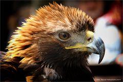 Adler sind in der Stadt ....