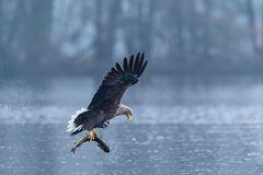 Adler und Hecht