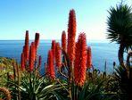Advent auf Madeira