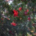 Advent im Wald