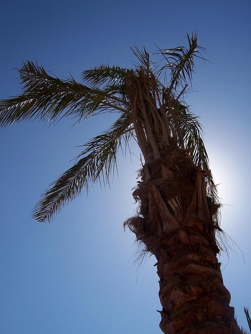 Ägypten 08