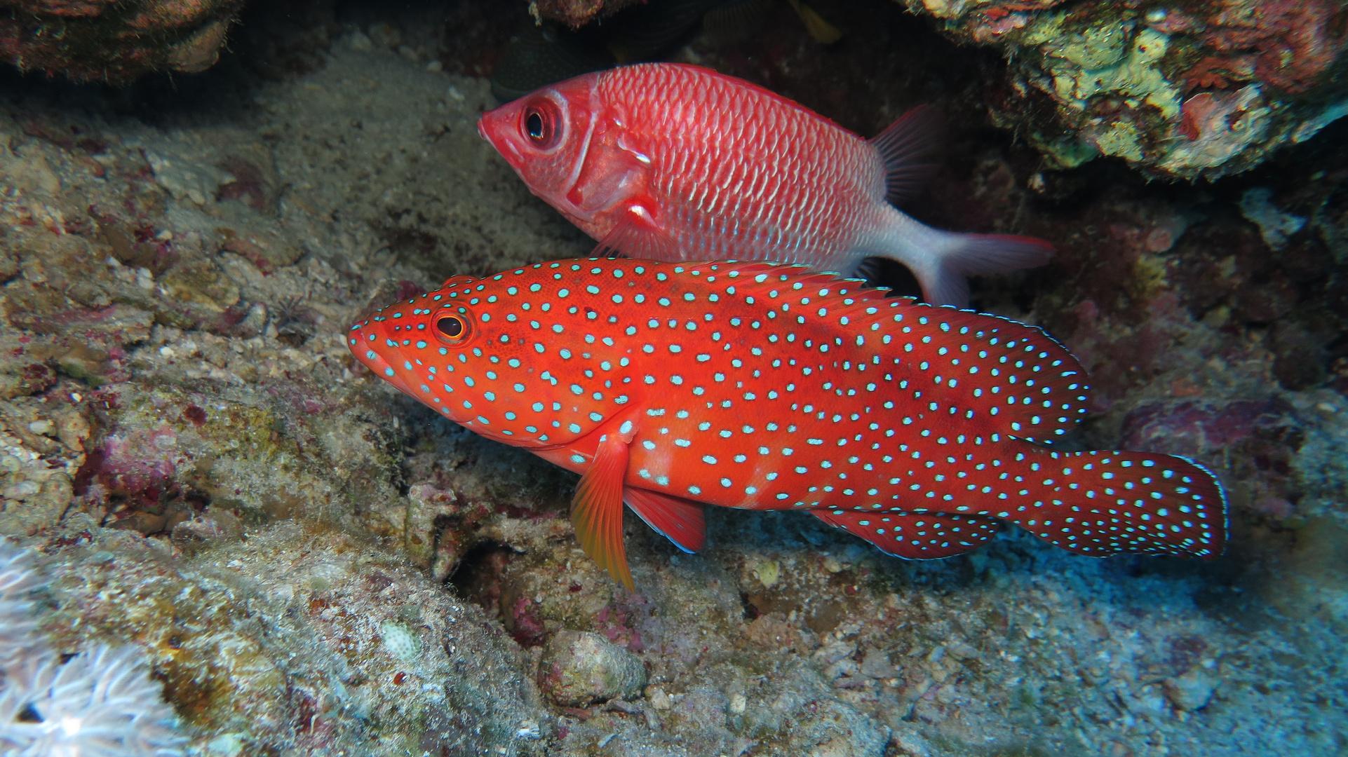 Ägypten Unterwasser 7