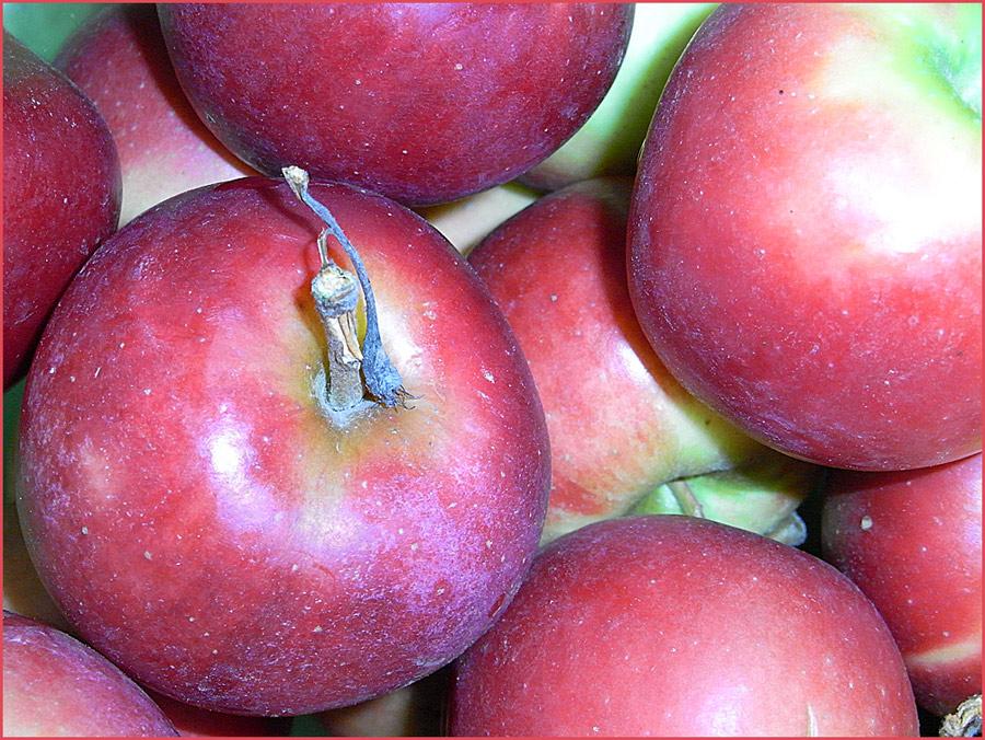 Äpfel sind gesund :-)