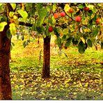 Äpfel und Fallobst