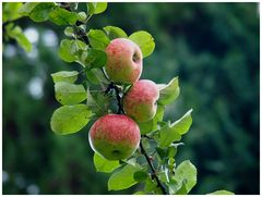 Äpfelzeit
