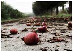 Äppelallee