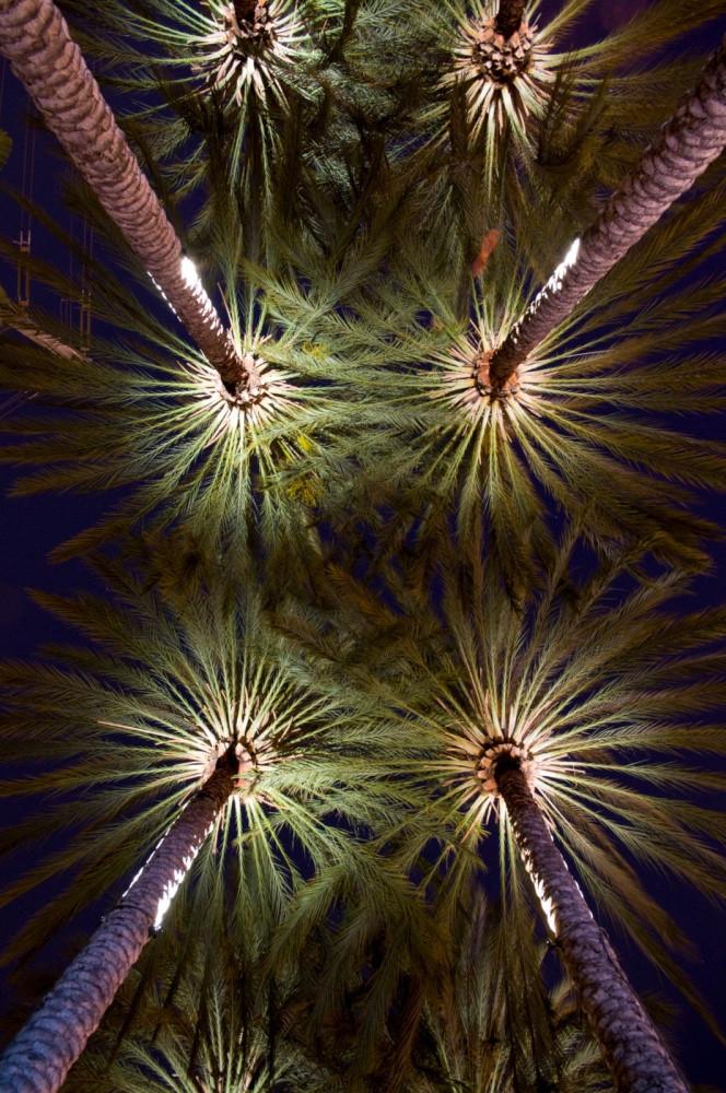 Aesthetic Palms