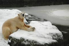 Ätsch, nun schneit es doch:-)