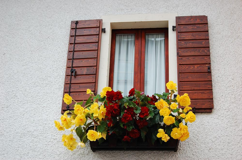 affacciati alla finesttra ... fiorellino