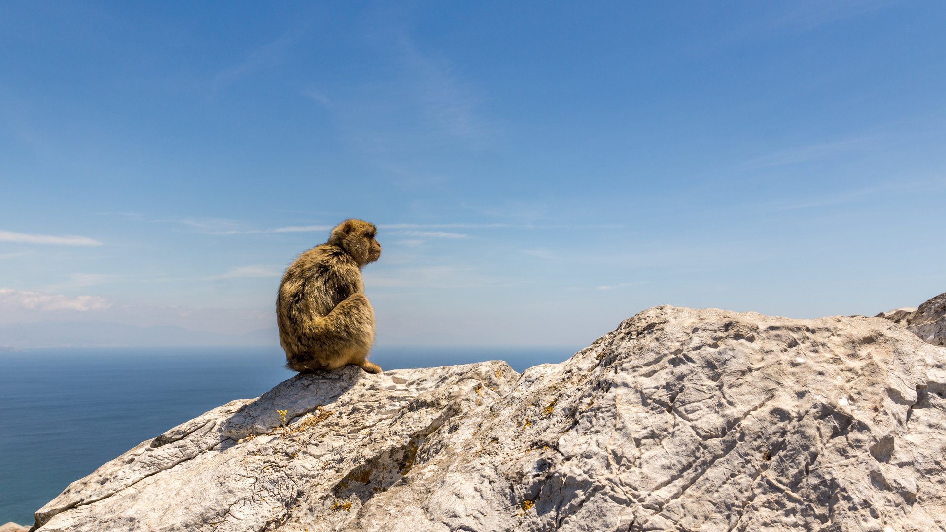 Affe auf Fels sitzend in Gibraltar