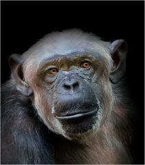 Affe im Münchner Zoo
