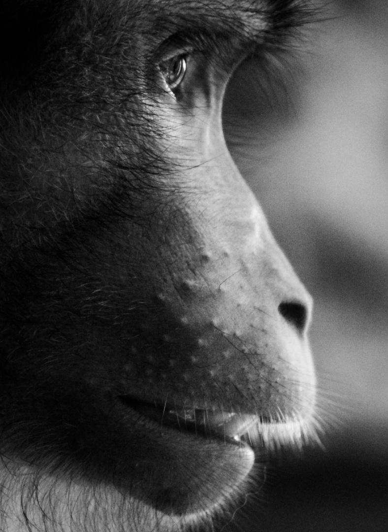Affe in der Zoom Erlebniswelt