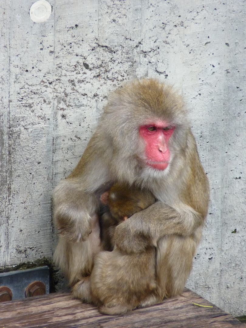 Affe mit Kind
