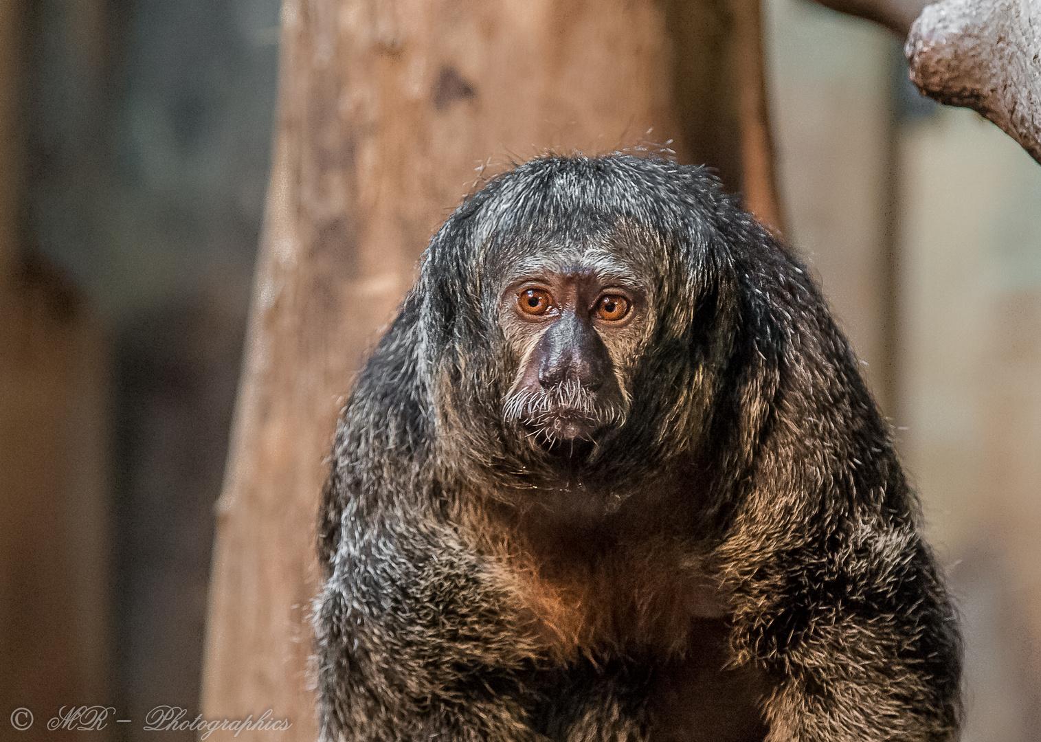 Affe oder so