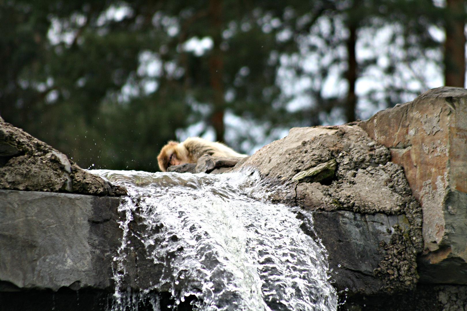Affe und Wasserfall