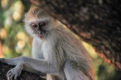 AFFE Wildlife Sambia A-94col