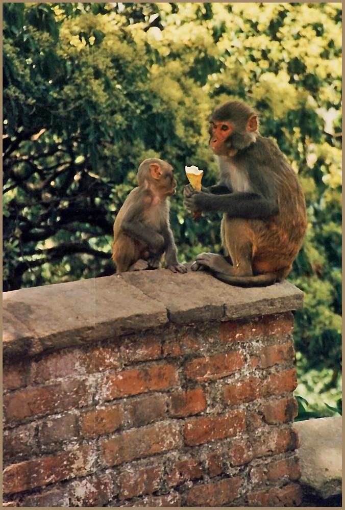 Affen am Stupa von Swayambunath, Kathmandu, Nepal