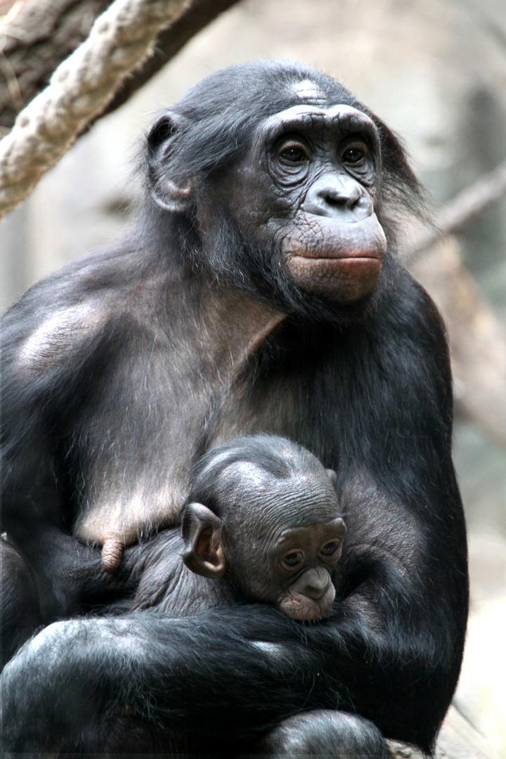 Affen Familie (: