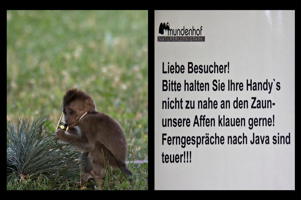 Affen-Ferngespräche ??