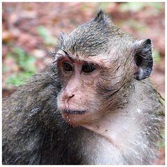 Affen haben keine Regenschirme