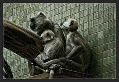Affen in Gefangenschaft