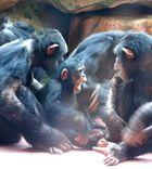 Affen-remmi-demmi