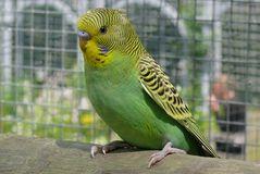 Affen- u. Vogelpark Eckenhagen (4) - Er blieb ganz ruhig vor mir sitzen