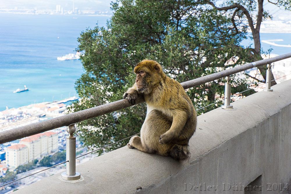 ...Affenalltag auf Gibraltar...