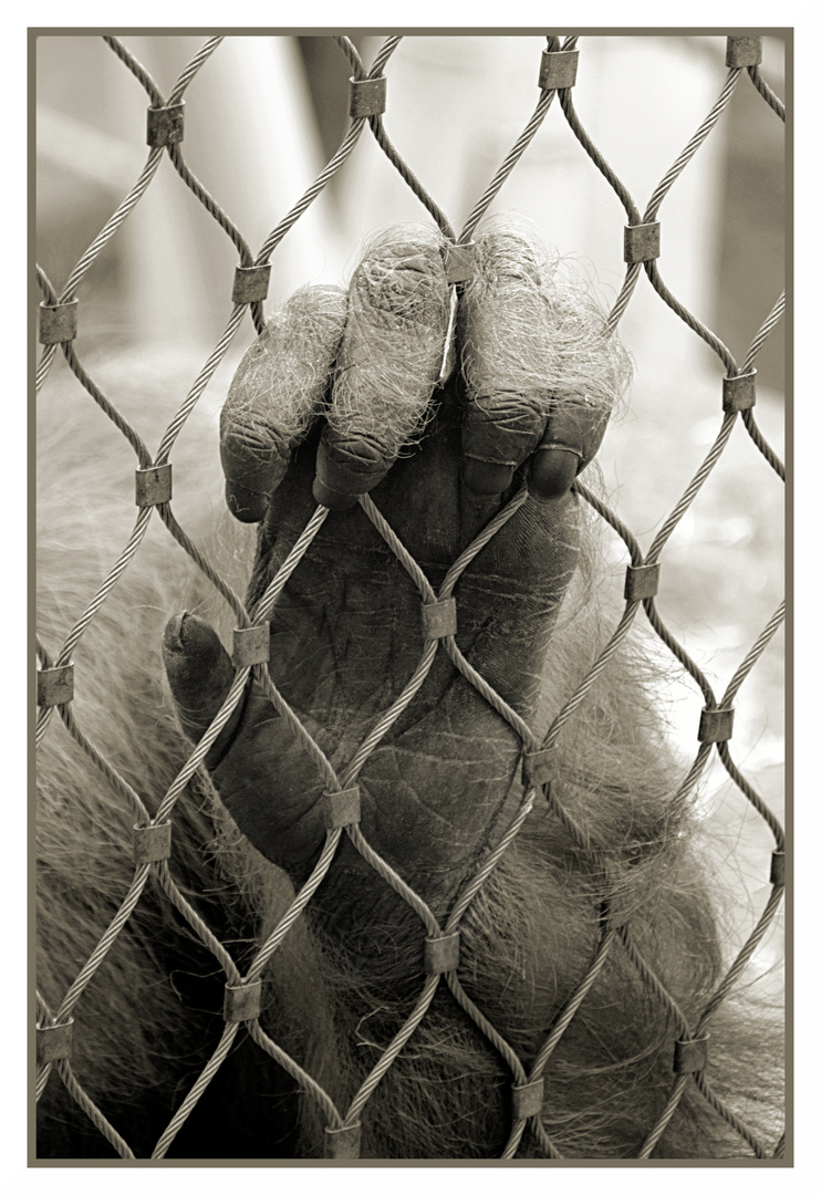 Affenhand