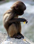 Affenkind