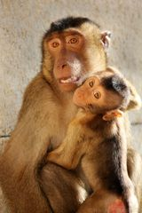 Affenliebe