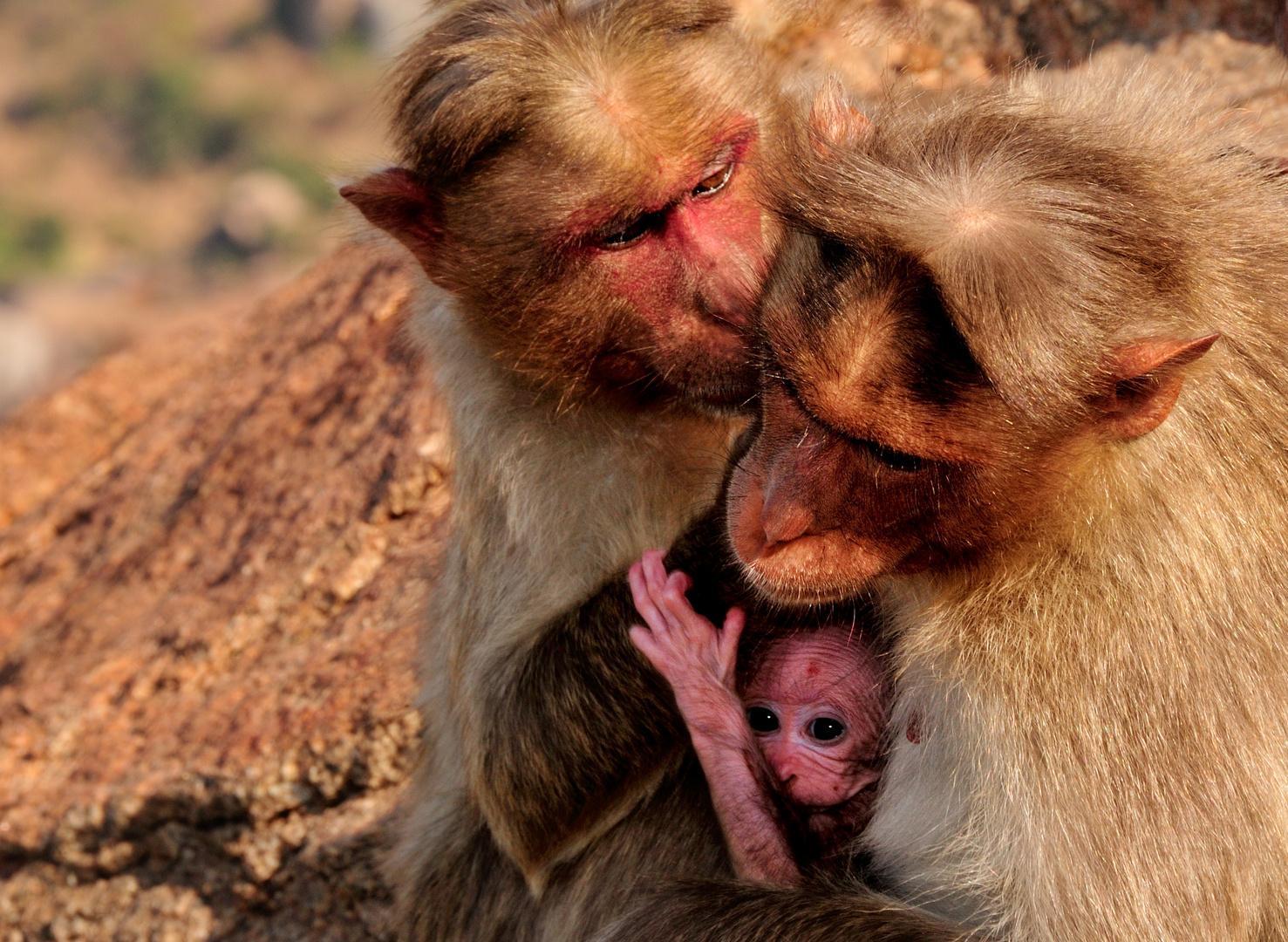 Affenliebe am Matanga Hill