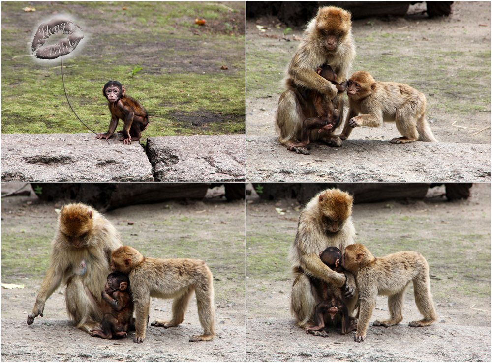 Affenliebe, die Zweite