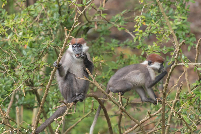 Affenpark