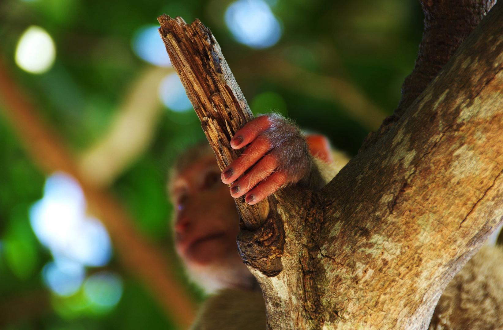 Affenpfötchen