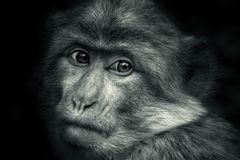 Affenporträt 2