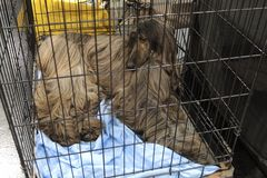 Afgane hinter dem Gitter
