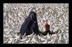 AFGHANISTAN 1986 (RE-LOAD)