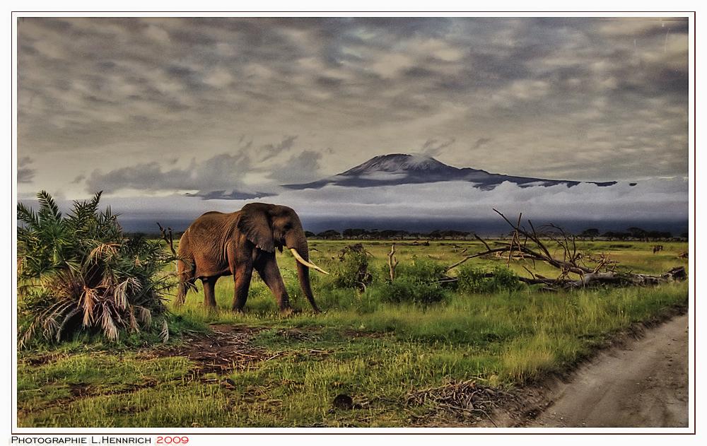 ~ AFRICA -- AFRICA ~