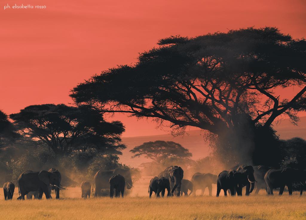 Africa...