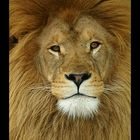 African King 2
