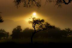 African lights-
