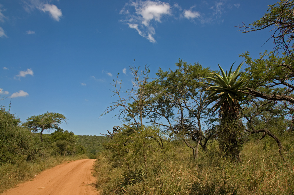 African Road