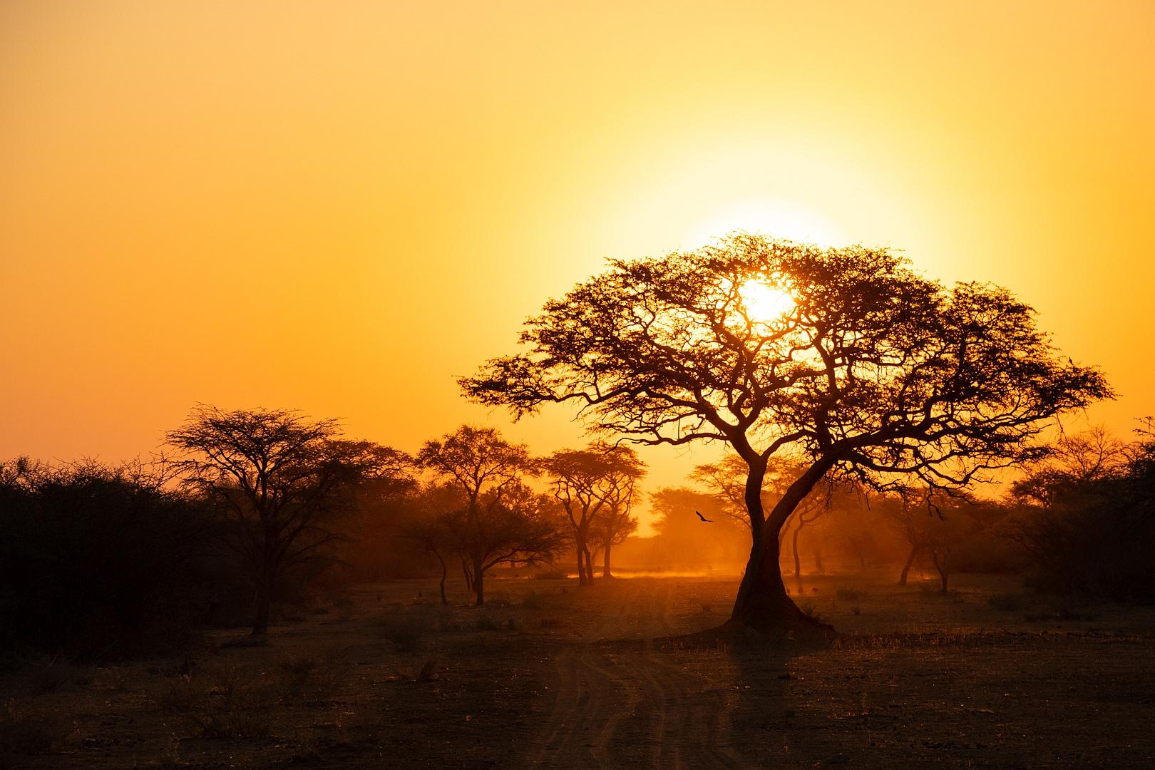 African Sunset I