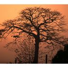 African Tree with Maria, Cote d'Ivoire