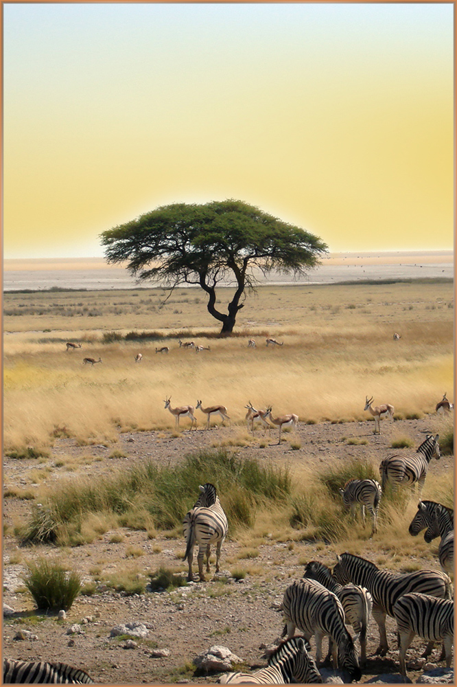 Afrika 2010